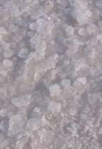 070602 トゥーズ湖 結晶.jpg