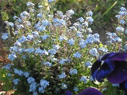 150501 flower 1.JPG