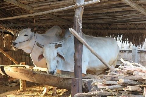 200202 min nan thu village.JPG